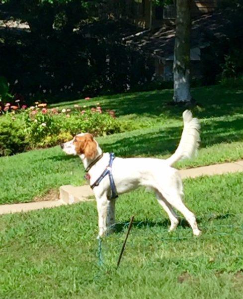 Tucker saw a rabbit.