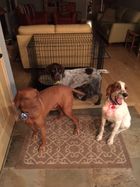Jack, Nic and Tucker waiting to go out in Silverthorne.