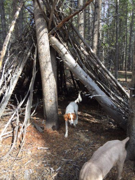 Tucker exploring around outside of Leadville.