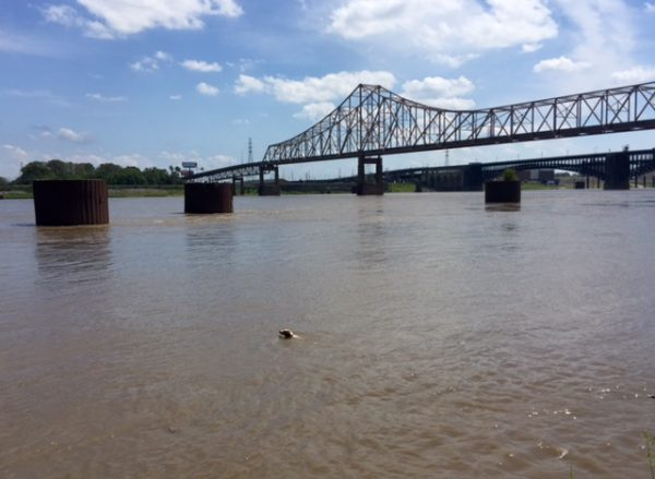 Tucker swimming in the Mississippi.