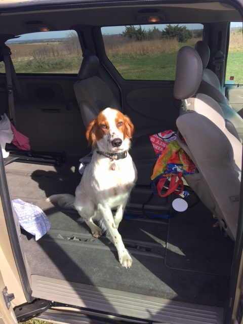 Tucker is super obedient most of the time. Here he is waiting to jump out of the van and run into the fields as fast as he can.
