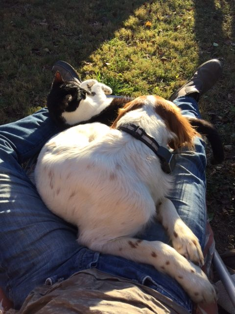 I've been trying to lay outside as much as possible. Tucker is always game. And usually at least one cat. It is nice.