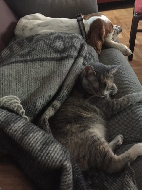 I try to get at least an hour more sleep during the day. I can always count on Tucker, and at least, one cat joins me.