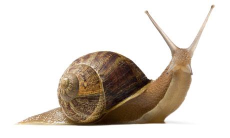 snail-03